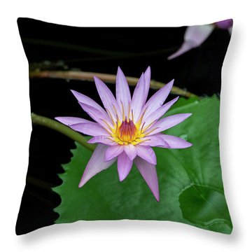Nymphaea A Siebert Waterlily Throw Pillow