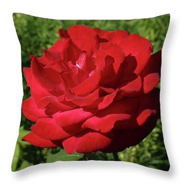 Oh The Blood Red Rose Throw Pillow