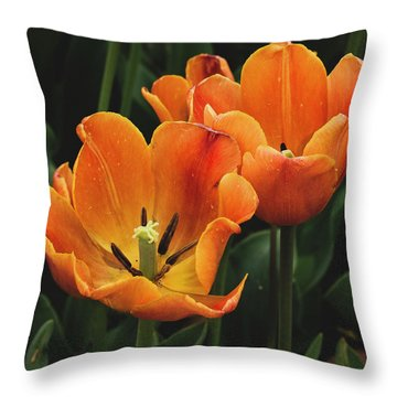 Orange Juice For The Aphid Throw Pillow