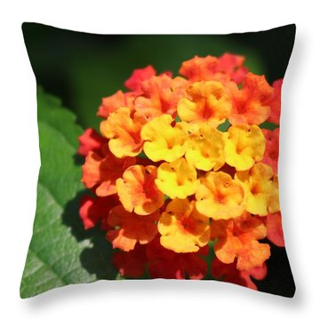 Orange Lantana Throw Pillow
