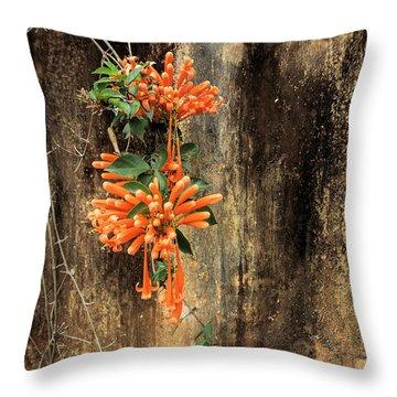 Pyrostegia Venusta Throw Pillows