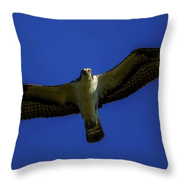 Osprey Glide In Blue Throw Pillow