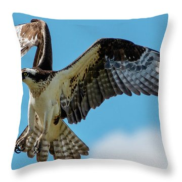 Osprey Hover Throw Pillow