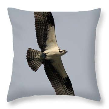Throw Pillow featuring the photograph Osprey With Fish by Rick Veldman