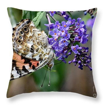 Painted Lady Hanging In There Throw Pillow