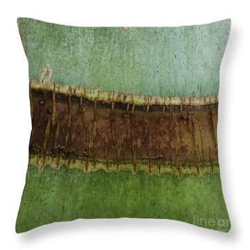 Throw Pillow featuring the photograph Palm Tree Trunk Patterns - Organic Patterns And Textures by Charmian Vistaunet