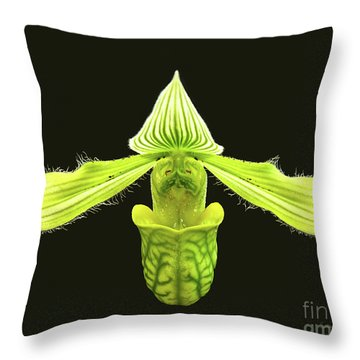 Paphiopedilum Venustum Closeup Throw Pillow
