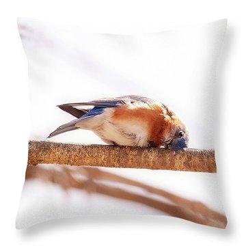Peek-a-boo Blue Bird Throw Pillow