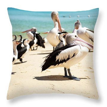 Throw Pillow featuring the photograph Pelicans During The Day by Rob D Imagery