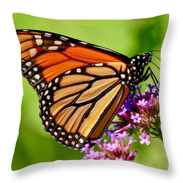 Perfect Monarch Throw Pillow