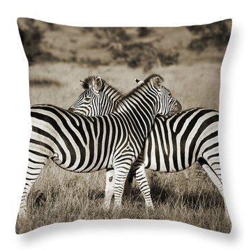 Perfect Zebras Throw Pillow