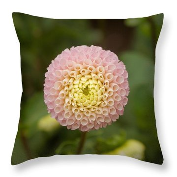 Throw Pillow featuring the photograph Petite Pink by Brian Eberly