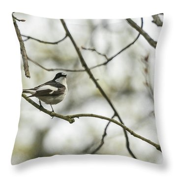 Pied Flycatcher Throw Pillow