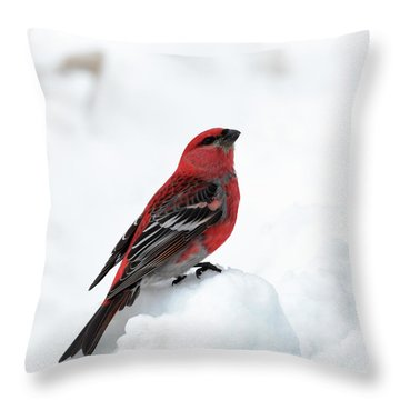 Pine Grosbeak In The Snow Throw Pillow
