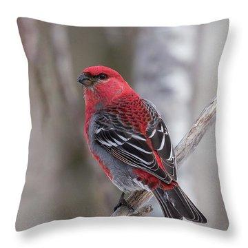 Pine Grosbeak Sax Zim Bog Throw Pillow