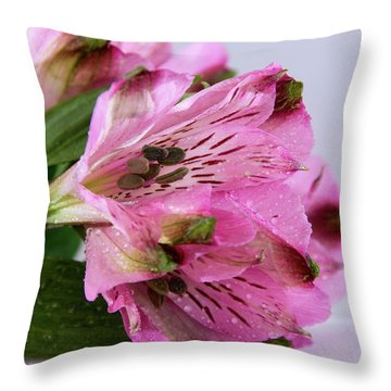Pink Alstroemeria-4 Throw Pillow