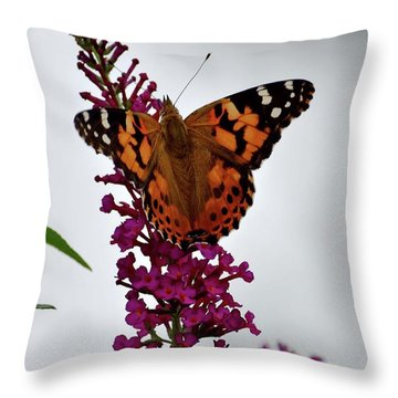 Pink Delight -  Painted Lady Throw Pillow