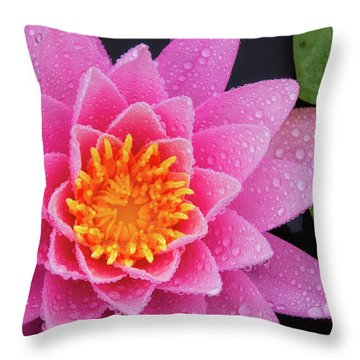 Pink Petals In The Rain  Throw Pillow