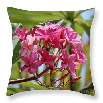Pink Plumeria Square Throw Pillow