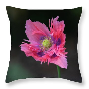 Throw Pillow featuring the photograph Pink Poppy by Dale Kincaid
