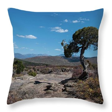 Pinyon Pine With North Rim In Background Black Canyon Of The Gunnison Throw Pillow