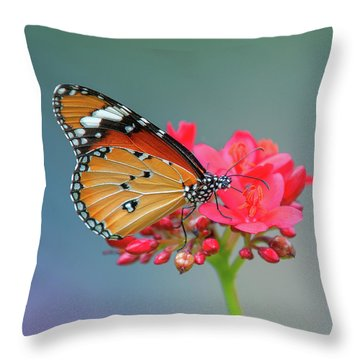 Throw Pillow featuring the photograph Plain Tiger Or African Monarch Butterfly Dthn0246 by Gerry Gantt