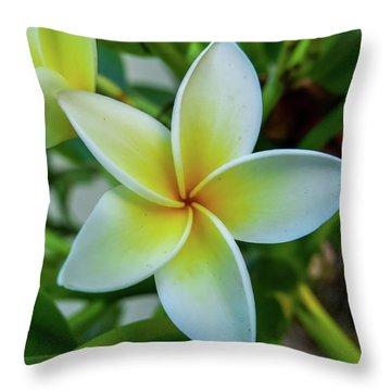 Plumeria In Bloom Throw Pillow