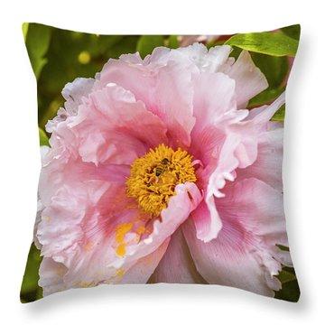 Pollen Trap Sprung Throw Pillow