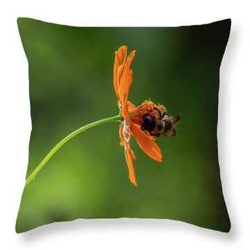 Throw Pillow featuring the photograph Pollinating The Cosmos by Dale Kincaid