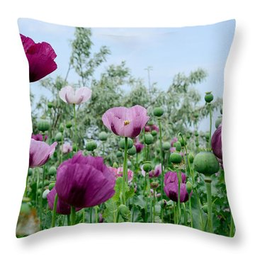 Seed Head Throw Pillows