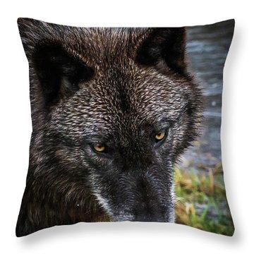 Portrait Niko Throw Pillow