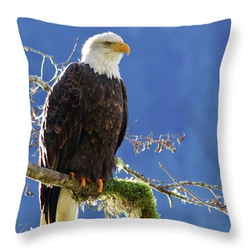 Portrait Of A Backlit Bald Eagle In Squamish Throw Pillow