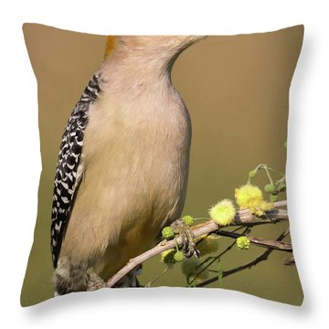 Portrait Of A Golden-fronted Woodpecker Throw Pillow