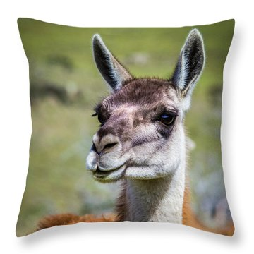 Portrait Of A Guanaco, Patagonia Throw Pillow