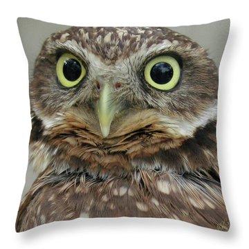 Portrait Of Burrowing Owl Throw Pillow
