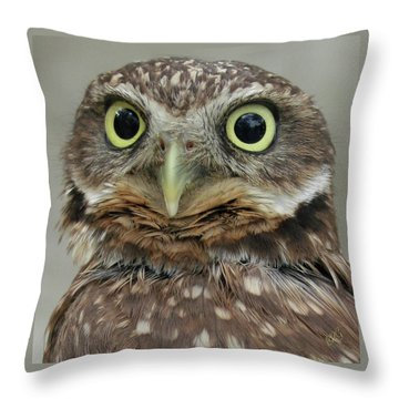 Portrait Of Burrowing Owl Throw Pillow