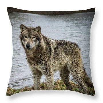 Posing By The Water Throw Pillow