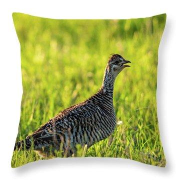 Prairie Chicken Hen Throw Pillow