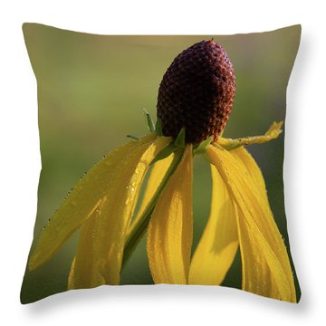 Throw Pillow featuring the photograph Prairie Coneflower by Dale Kincaid
