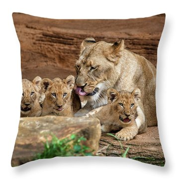 Pride Of The Pride 6114 Throw Pillow