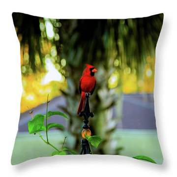 Proud Male Cardinal Throw Pillow