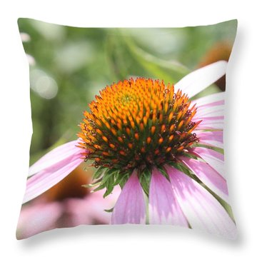Purple Coneflower Bloom And Petals Throw Pillow