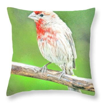 Purple Finch, Animal Portrait Throw Pillow