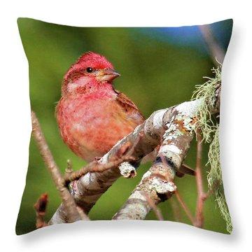 Purple Finch Throw Pillow