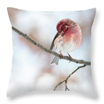 Throw Pillow featuring the photograph Purple Finch Preening by Lara Ellis