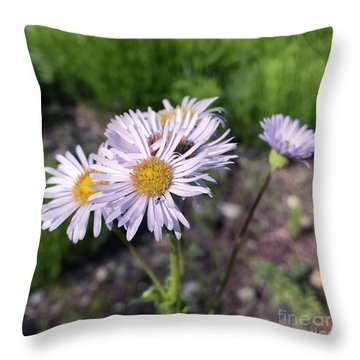Purple Fleabane 5 Throw Pillow