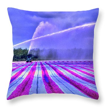 Throw Pillow featuring the photograph Purple Grain by Wayne King