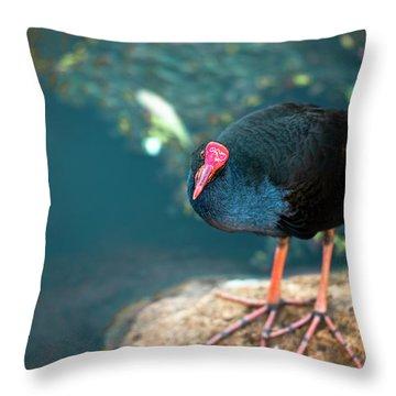 Purple Swamphenn Throw Pillow