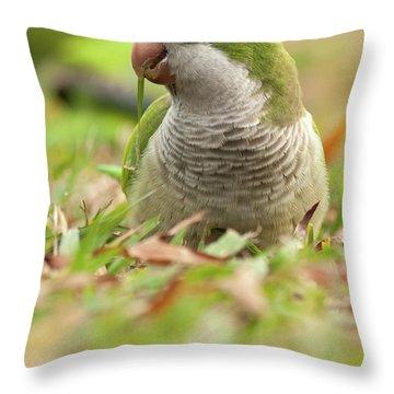 Quaker Parrot #3 Throw Pillow