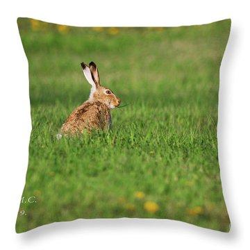 Rabbit Chews Throw Pillow